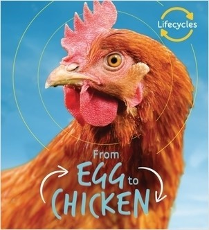 Cover: Egg to Chicken