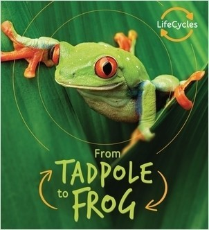 Cover: Tadpole to Frog
