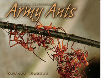Cover: Army Ants