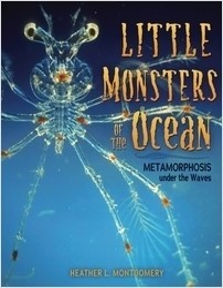 Cover: Little Monsters of the Ocean: Metamorphosis under the Waves