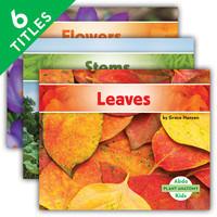 Cover: Plant Anatomy